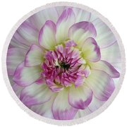 Round Beach Towel featuring the photograph Purple And Cream Dahlia by Jeannie Rhode