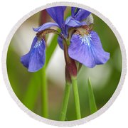 Purple Bearded Iris Round Beach Towel