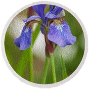 Purple Bearded Iris Oil Round Beach Towel