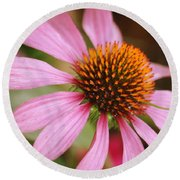 Purple Coneflower Round Beach Towel