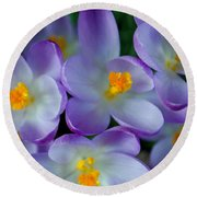 Purple Crocus Gems Round Beach Towel by Tikvah's Hope
