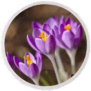 Purple Crocus Round Beach Towel by Scott Carruthers