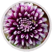 Purple Dahlia White Tips Round Beach Towel