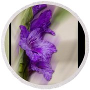 Purple Gladiolus Round Beach Towel