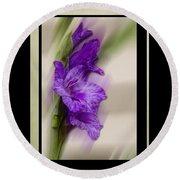 Purple Gladiolus Bloom Round Beach Towel
