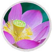 Purple Lotus Blossom Round Beach Towel