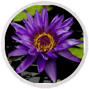 Round Beach Towel featuring the photograph Purple Lotus Water Lilies by James C Thomas