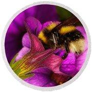 Purple Petunias With A Bumblebee Round Beach Towel