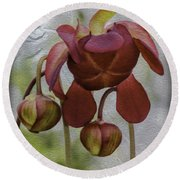 Round Beach Towel featuring the photograph Purple Pitcher Plant by Betty Denise