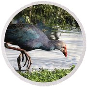 Round Beach Towel featuring the photograph Purple Swamphen by Ramabhadran Thirupattur