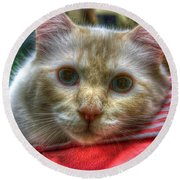 Round Beach Towel featuring the photograph Purrfect Companion by Dennis Baswell