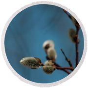 Pussy Willow... Round Beach Towel