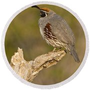 Round Beach Towel featuring the photograph Quail On A Stick by Bryan Keil