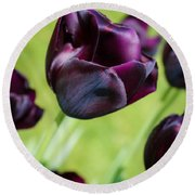 Queen Of The Night Black Tulips Round Beach Towel