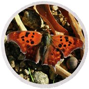 Round Beach Towel featuring the photograph Question Mark Butterfly by Donna Brown