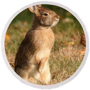 Round Beach Towel featuring the photograph Rabbit Standing In The Sun by William Selander