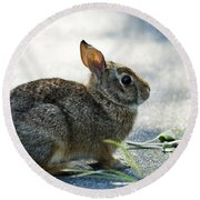 Round Beach Towel featuring the photograph Rabbit by Yulia Kazansky