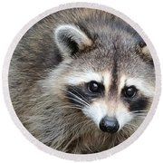 Raccoon Eyes Round Beach Towel by Carol Groenen
