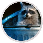 Raccoon In Garbage Can Round Beach Towel