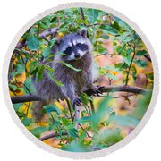 Raccoon Round Beach Towel by Inge Johnsson