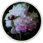 Rain-soaked Peonies Round Beach Towel