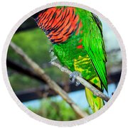 Round Beach Towel featuring the photograph Rainbow Lory by Sennie Pierson