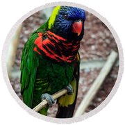 Round Beach Towel featuring the photograph Rainbow Lory Too by Sennie Pierson