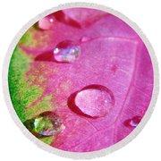 Raindrop On The Leaf Round Beach Towel by D Hackett