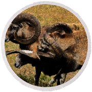 Round Beach Towel featuring the photograph Rams At Half-time by Doc Braham