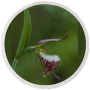 Ram's Head Lady-slipper Round Beach Towel