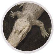 Rare White Alligator Round Beach Towel