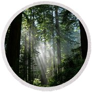 Rays In Redwoods Round Beach Towel