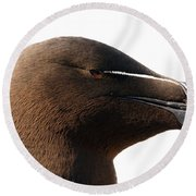 Razorbill Auk Round Beach Towel by Jeannette Hunt