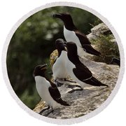 Razorbill Cliff Round Beach Towel by Dreamland Media