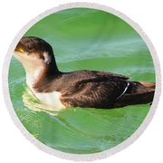 Razorbill In Florida Round Beach Towel