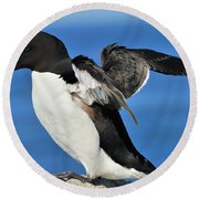 Razorbill Round Beach Towel by Tony Beck