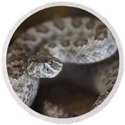 A Rattlesnake Thats Ready To Strike Round Beach Towel