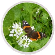 Round Beach Towel featuring the photograph Red Admiral Butterfly by Lingfai Leung