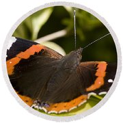 Red Admiral Butterfly Round Beach Towel by Richard Thomas