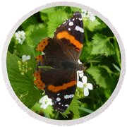 Round Beach Towel featuring the photograph Red Admiral In Toronto by Lingfai Leung