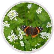 Round Beach Towel featuring the photograph Red Admirals by Lingfai Leung