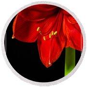 Red Amaryllis Flower Round Beach Towel