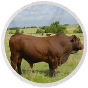 Red Angus Bull Round Beach Towel by Charles Beeler
