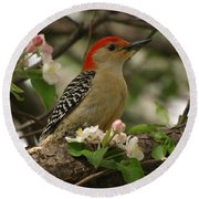 Round Beach Towel featuring the photograph Red-bellied Woodpecker by James Peterson