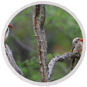 Red-billed Hornbills Round Beach Towel by Bruce J Robinson