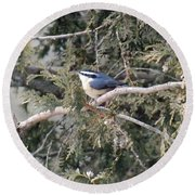 Round Beach Towel featuring the photograph Red Breasted Nuthatch by Brenda Brown