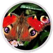 Red Butterfly In The Garden Round Beach Towel