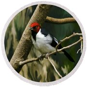 Round Beach Towel featuring the photograph Red-capped Cardinal by Adam Olsen