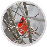 Red Cardinal Northern Bird Round Beach Towel