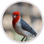 Red Crested Cardinal Round Beach Towel by DejaVu Designs